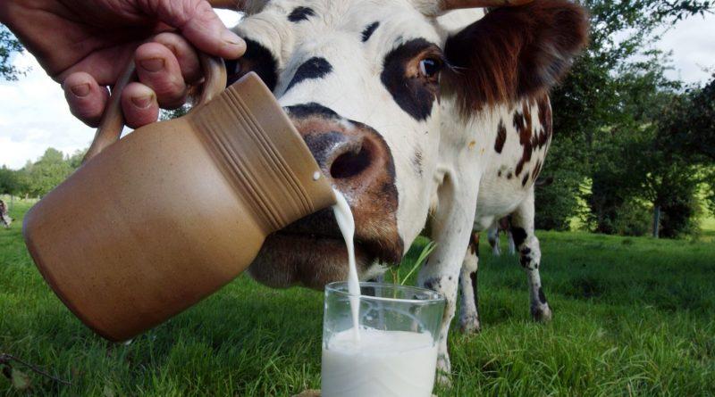 Вред молока