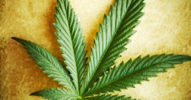 Чем опасно курение марихуаны