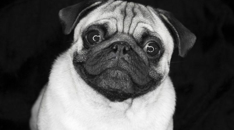 Болезни породистых собак