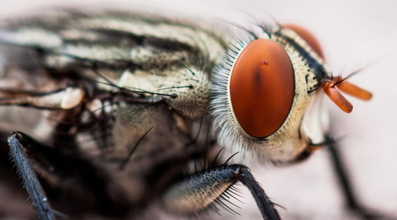 Как мухи разносят вирусы
